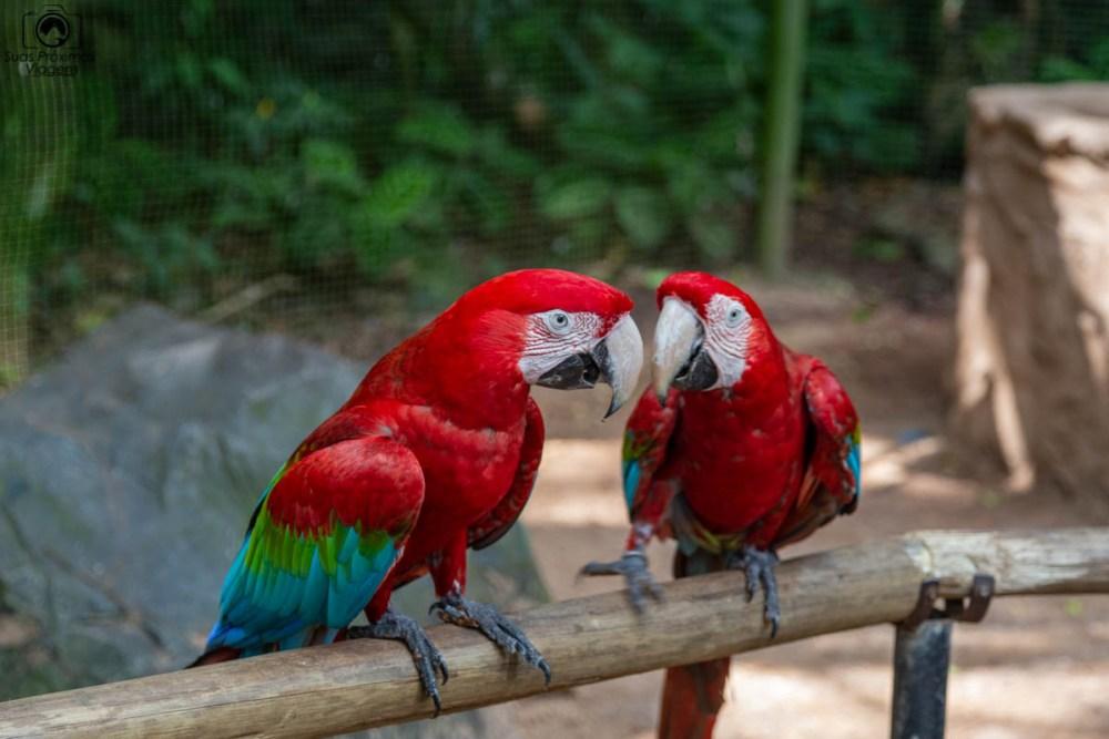 Vista de um casal de araras no Parque das Aves em O que fazer em Foz do Iguaçu