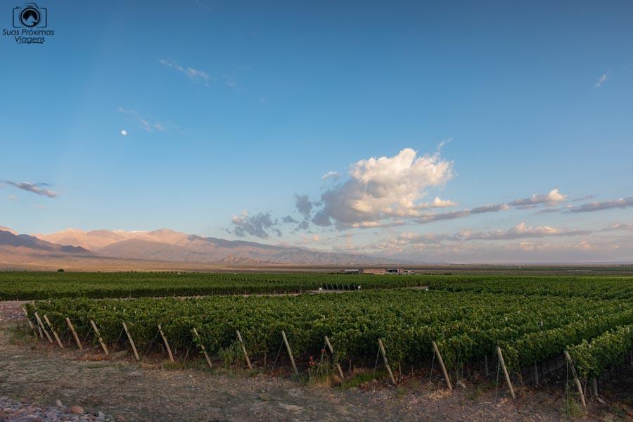 imagem das parreiras cheias de uvas pré vendimia em Mendoza