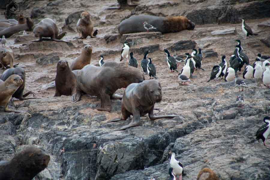 imagem da ilha dos lobos no passeio da pinguinera