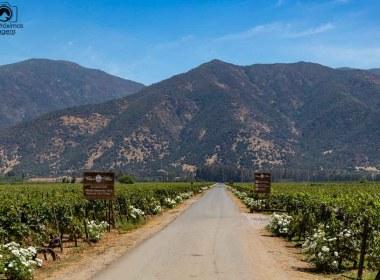 Imagem das parreiras da vinícola casa silva no vale de Colchagua Chile