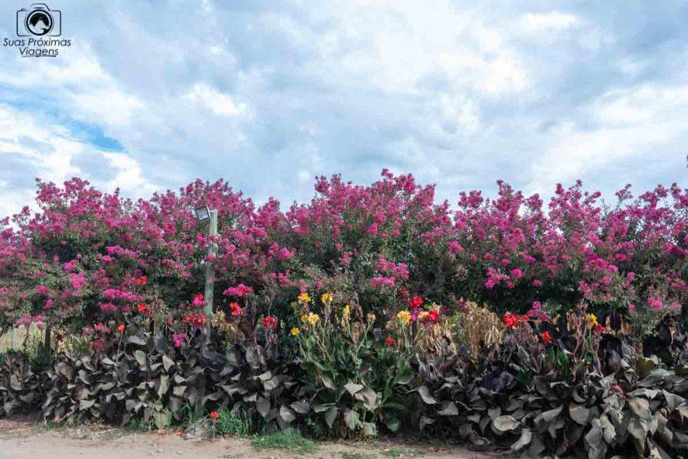 imagem do jardim ao redor da pousada colchagua