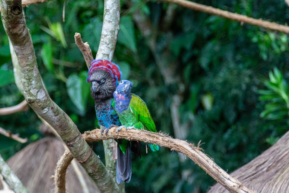 imagem de um papagaio no parque das aves em Foz do Iguaçu