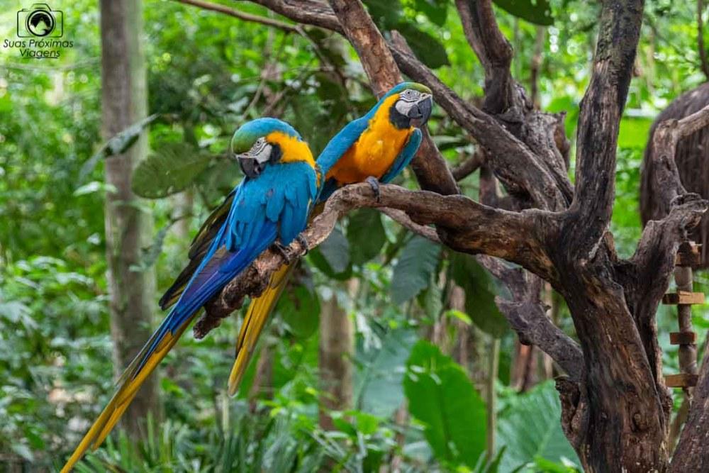 Imagem de 2 araras azuis no parque das aves em Foz do Iguaçu