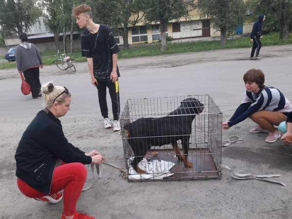В Запорожской области мужчина бросил ротвейлера и уехал на ...
