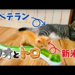 "<span class=""title"">新米猫とベテラン猫の遊び方の違いがおもしろい。〜Differences between Toro and Sio play.〜</span>"