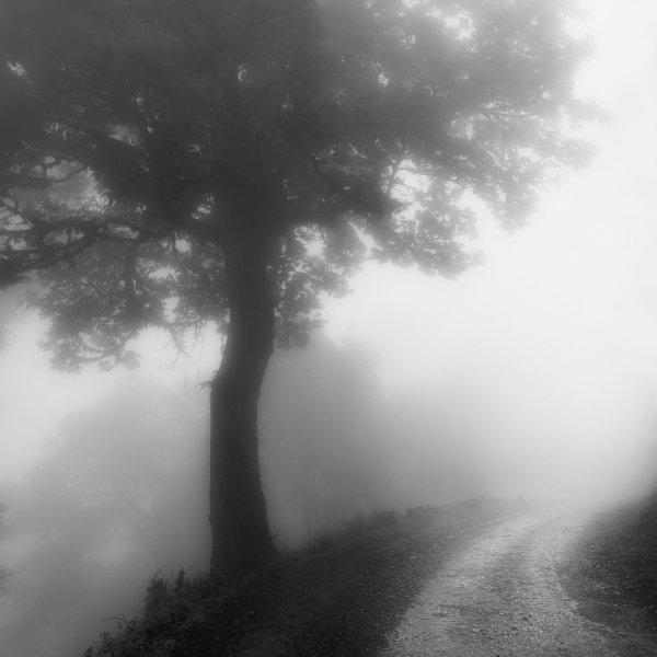 Misty and Mystic, Fine Art Black & White Photography Artwork by Subhankar Das