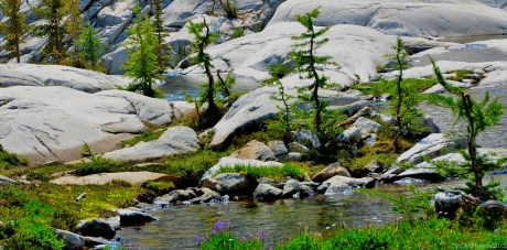 Baby larches along the stream