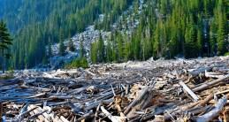 Log pile on Snow Lake