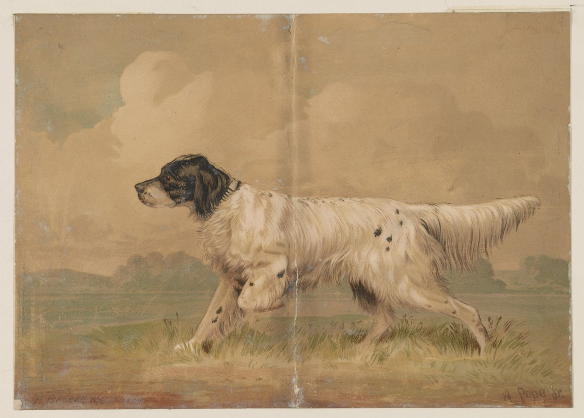 An illustration of a hunting dog.