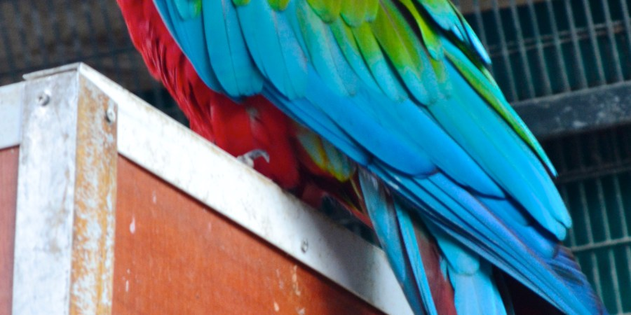 Parrot at the Jerusalem Biblical Zoo