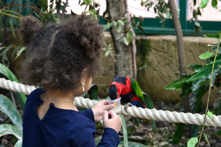 Jasmine feeding the birds at the Jerusalem Biblical Zoo