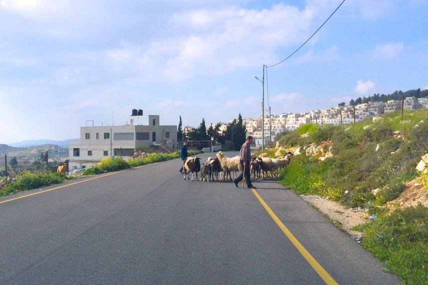 Kafaiyas for sale in Bethlehem