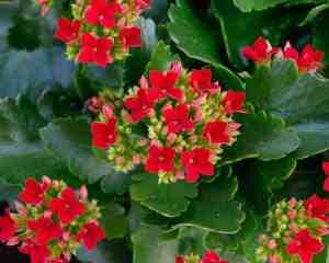 plantrescue.com
