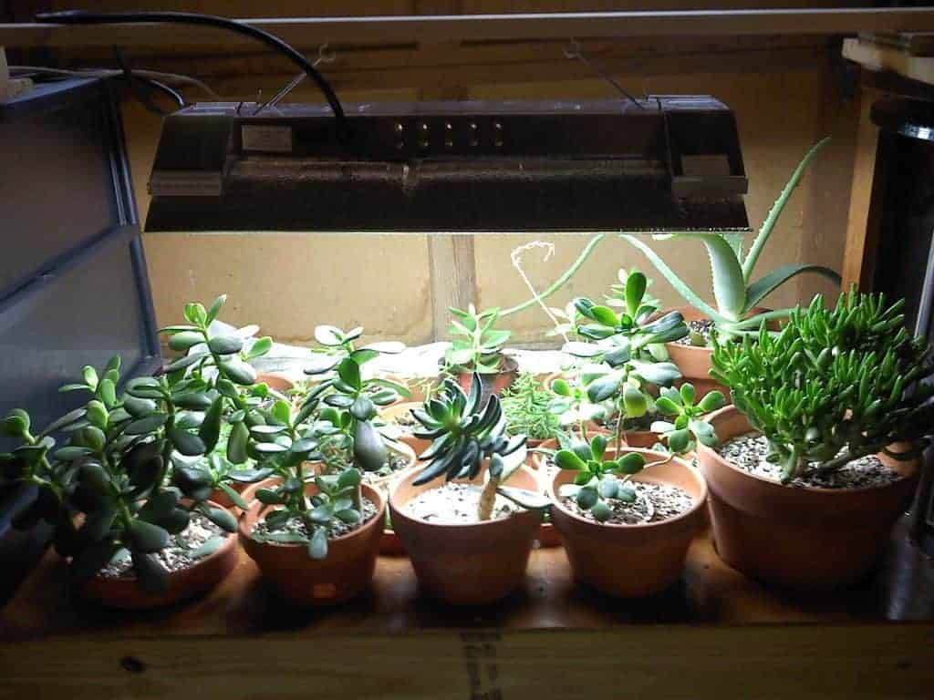 What kind of grow light do I need for succulents?