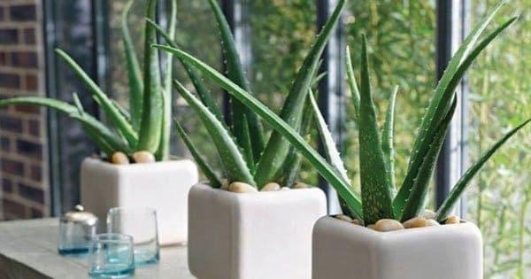 indoor lowlight plants