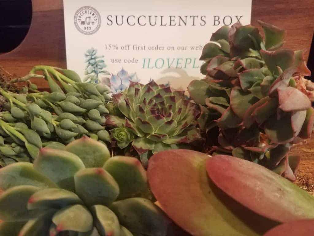 Succulents Box Subscription Box Review