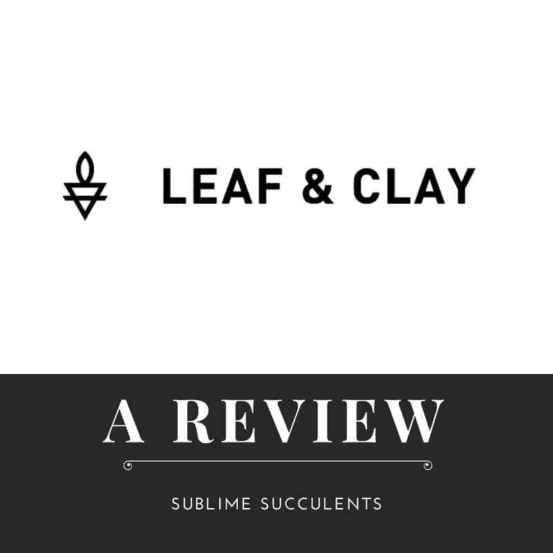 Leaf & Clay Online Succulent Store Review