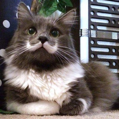 hamiltonhipsercat
