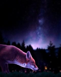 image de base d'un photomontage photoshop image finale