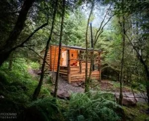Nurturing the primal - image of a Cabin in the woods