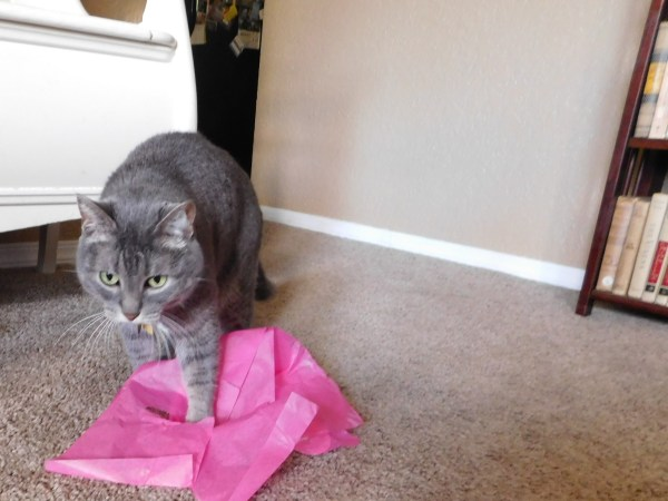 Bella cleaning up tissue paper