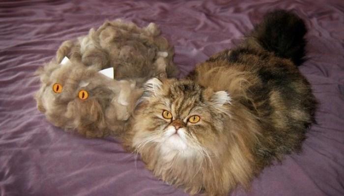 cat hair cat