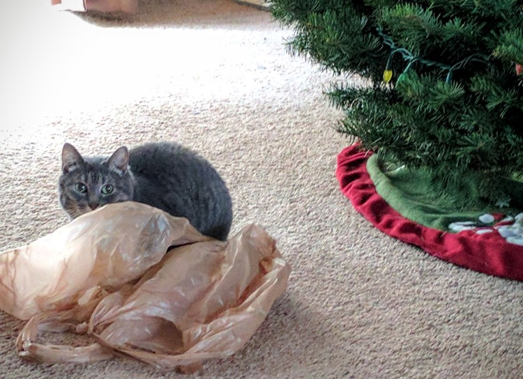 bella by plastic bags