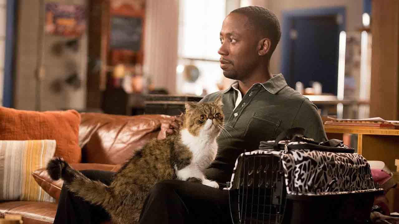 I 10 gatti più amati delle serie TV
