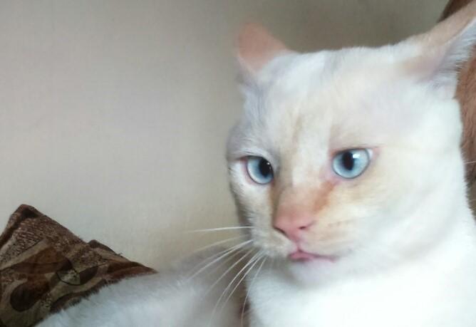 pisicul meu