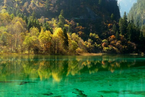 BRILLIANT -- Yellow foliage reflects into one of the beautiful lakes of the Jiuzhaigou area.