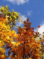 Fall's jewel tones.