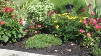 This year annuals - Dahlia, Marigolds, Impatiens, Sanp Dragon
