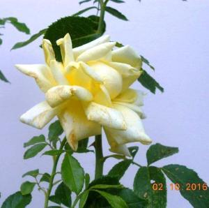 autumn-flowers-14