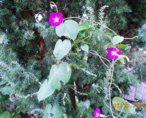 autumn-flowers-17