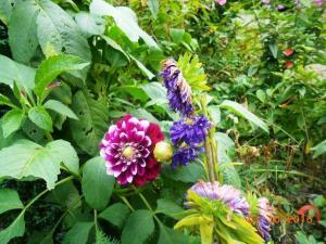 autumn-flowers-5