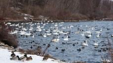 Birds at LaSalle Park in Burlington, Ontario