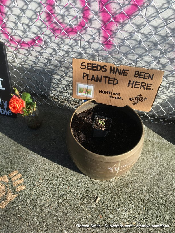 """Seeds have been planted here"" sign in garden pot, challenging the temporariness of this TAZ"