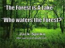 the-forest-is-a-lake