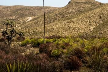 Especies protegidas en un rango de 100 hectáreas a la redonda sufren la amenaza de la extinción
