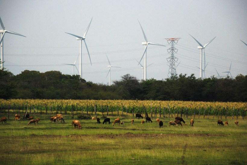 El parque eólico propiedad de Gas Natural Fenosa, que utiliza el nombre Biìo Hioxo Energía, continúa su avance en tierras comunales, donde existen centros ceremoniales sagrados en Zaragoza Juchitán de Oaxaca. Fotografía: Santiago Navarro