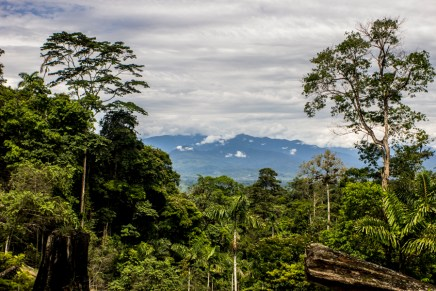 Costa Rica: REDD+ en el país de la máscara verde