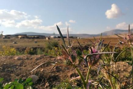 El Valle de Jordán: espejo del dolor de un pueblo que Israel busca exterminar
