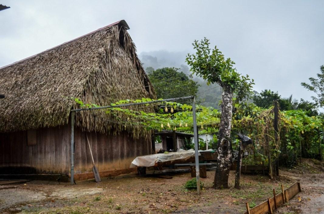 La Selva Chinateca, municipio de Santiago Jocotepec. Fotografía: José Luis Santillán