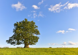 A Wednesday Rant: Getting intimate…with a tree