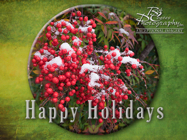 happy holidays berry photo