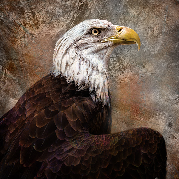 eagle art portrait