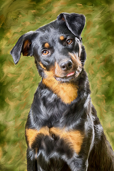 dog painting stephen moody