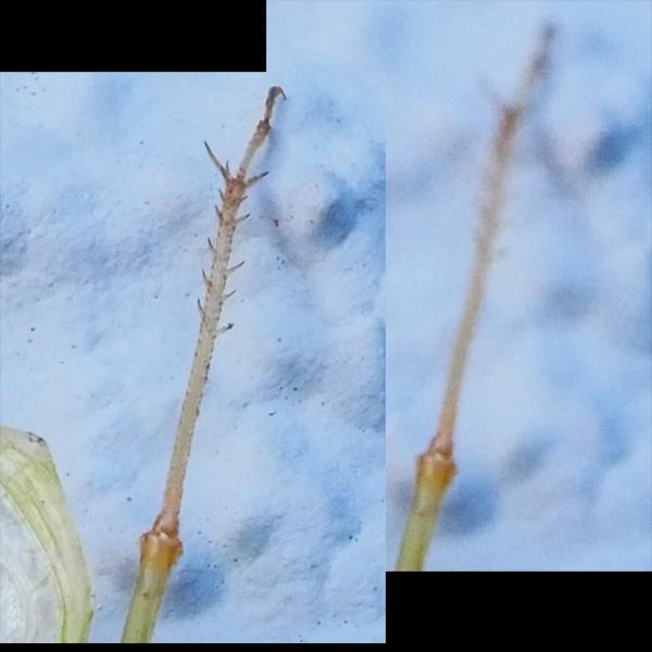 green bug comparison