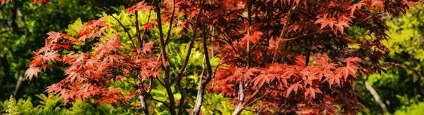 red butte arboretum