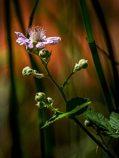 wildflower near oak creek photo